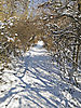 Winter_Weg