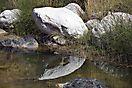 Spiegelung im Wadi Tiwi