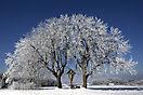 4. Platz 'Ein Wintertraum' von Wolfgang Koston