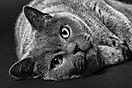 1. Platz 'Cat's Eyes' von Ralf Wandke